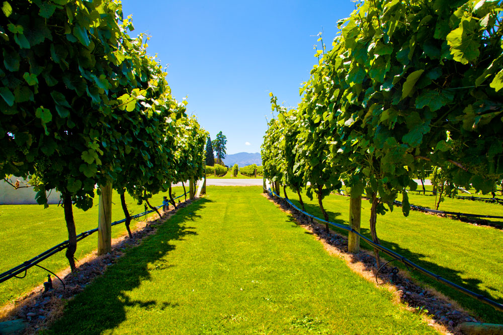 Marlborough Winery (12)