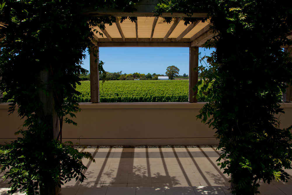 Marlborough Winery (9)