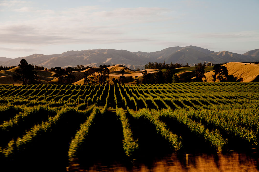 Marlborough Winery (6)